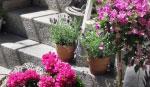 Blomster butikker i Nyborg